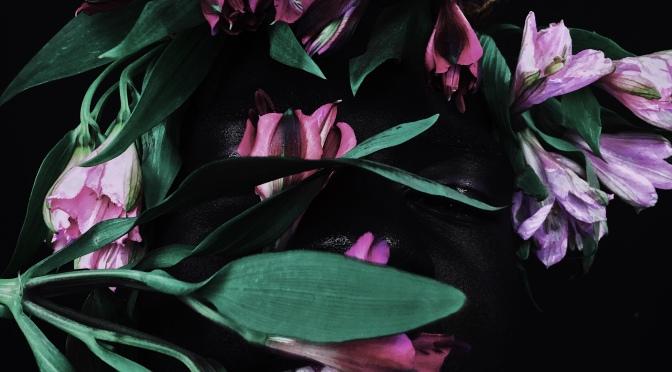 Noir Alstroemeria
